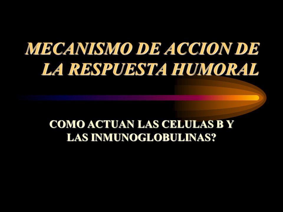 MECANISMO DE ACCION DE LA RESPUESTA HUMORAL COMO ACTUAN LAS CELULAS B Y LAS INMUNOGLOBULINAS?