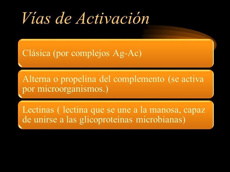 Vías de Activación Clásica (por complejos Ag-Ac) Alterna o propelina del complemento (se activa por microorganismos.) Lectinas ( lectina que se une a