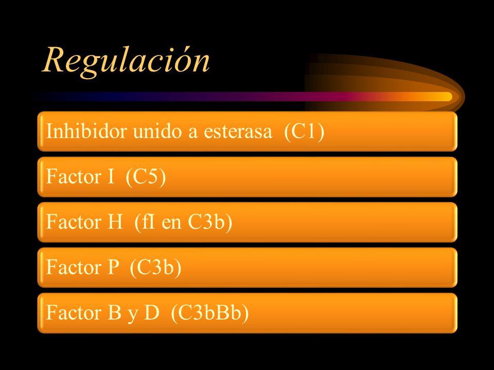 Regulación Inhibidor unido a esterasa (C1)Factor I (C5)Factor H (fI en C3b)Factor P (C3b)Factor B y D (C3bBb)