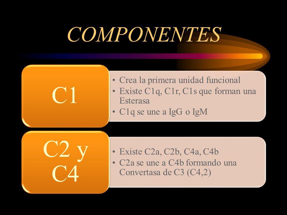 COMPONENTES Crea la primera unidad funcional Existe C1q, C1r, C1s que forman una Esterasa C1q se une a IgG o IgM C1 Existe C2a, C2b, C4a, C4b C2a se u