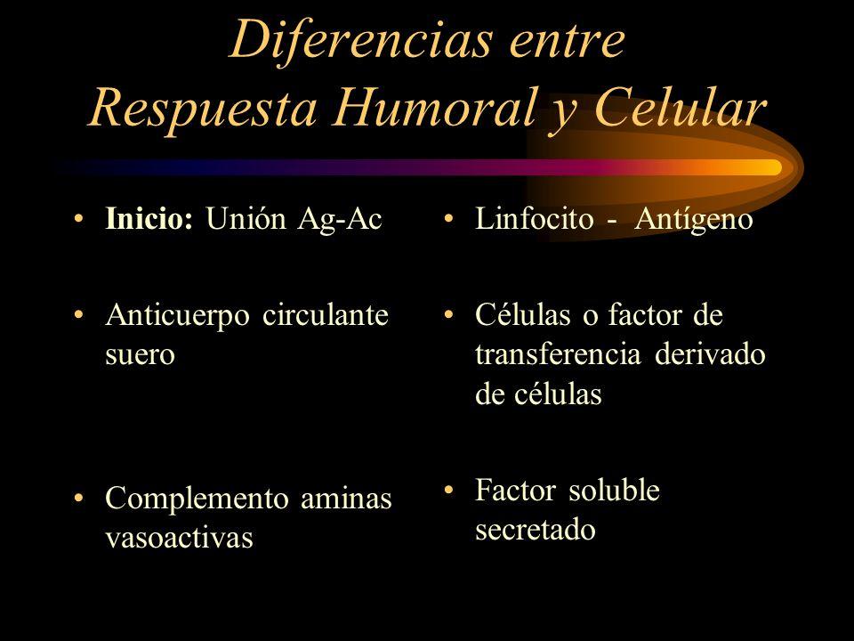 Diferencias entre Respuesta Humoral y Celular Inicio: Unión Ag-Ac Anticuerpo circulante suero Complemento aminas vasoactivas Linfocito - Antígeno Célu