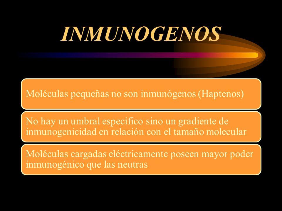 INMUNOGENOS Moléculas pequeñas no son inmunógenos (Haptenos) No hay un umbral específico sino un gradiente de inmunogenicidad en relación con el tamañ