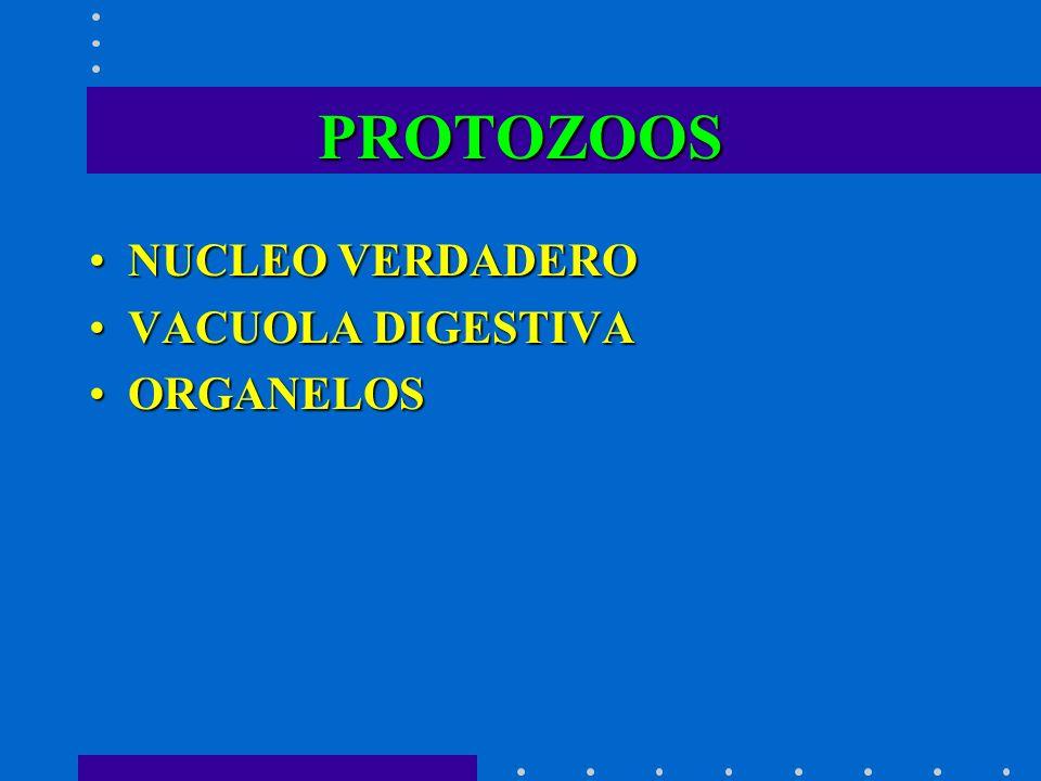 PROTOZOOS NUCLEO VERDADERONUCLEO VERDADERO VACUOLA DIGESTIVAVACUOLA DIGESTIVA ORGANELOSORGANELOS