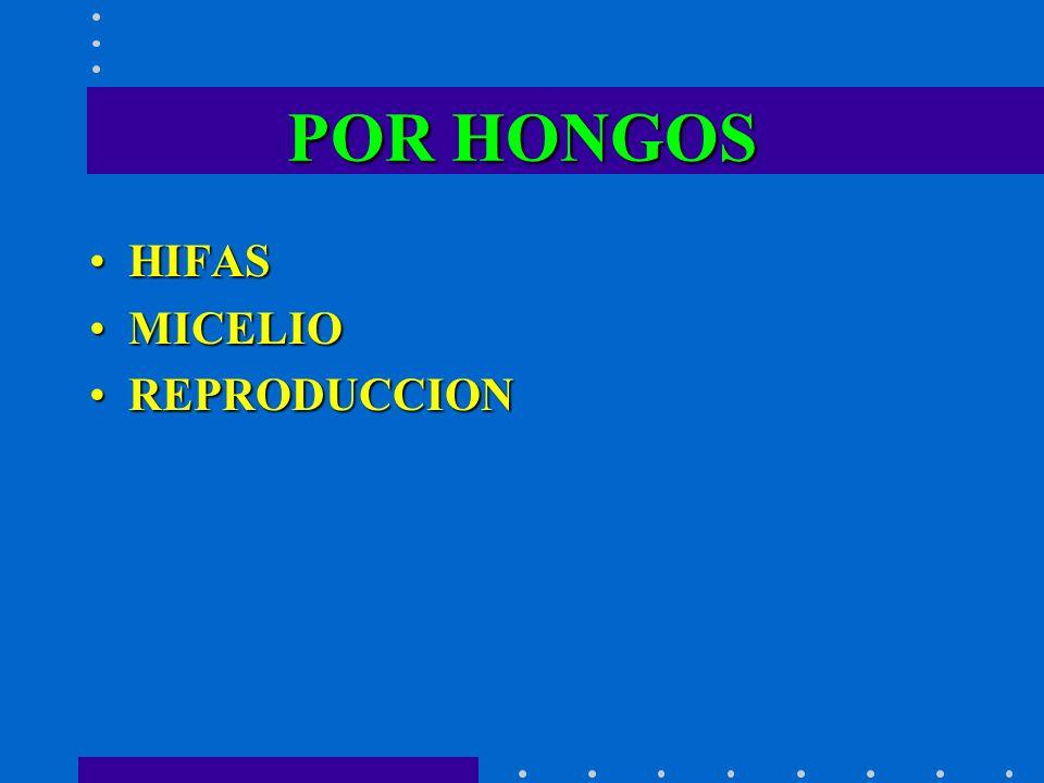POR HONGOS HIFASHIFAS MICELIOMICELIO REPRODUCCIONREPRODUCCION