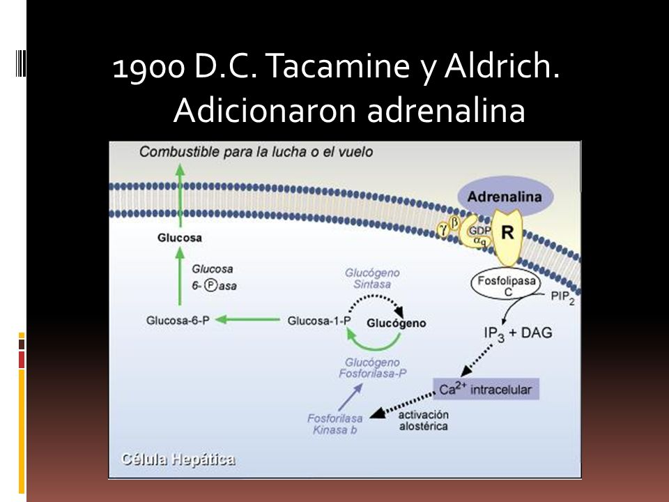 1900 D.C. Tacamine y Aldrich. Adicionaron adrenalina