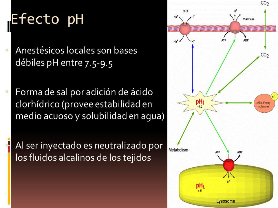 Efecto pH Anestésicos locales son bases débiles pH entre 7.5-9.5 Forma de sal por adición de ácido clorhídrico (provee estabilidad en medio acuoso y solubilidad en agua) Al ser inyectado es neutralizado por los fluidos alcalinos de los tejidos