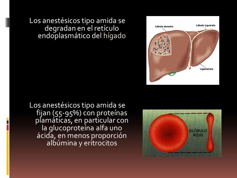 Los anestésicos tipo amida se degradan en el retículo endoplasmático del hígado Los anestésicos tipo amida se fijan (55-95%) con proteínas plamáticas, en particular con la glucoproteína alfa uno ácida, en menos proporción albúmina y eritrocitos