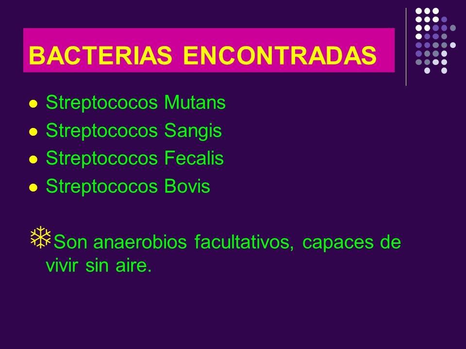 BACTERIAS ENCONTRADAS Streptococos Mutans Streptococos Sangis Streptococos Fecalis Streptococos Bovis Son anaerobios facultativos, capaces de vivir si