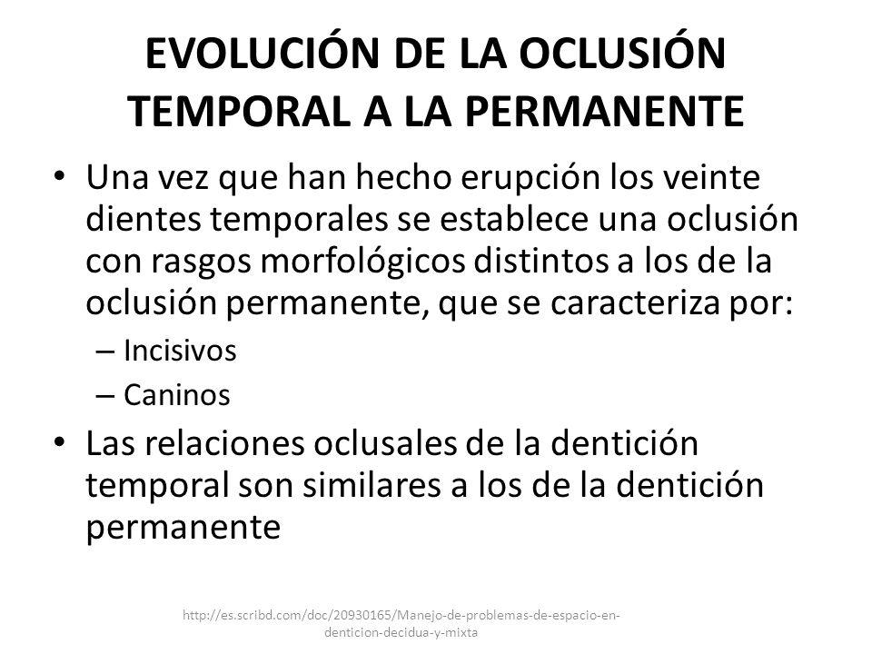 EVOLUCIÓN DE LA OCLUSIÓN TEMPORAL A LA PERMANENTE Una vez que han hecho erupción los veinte dientes temporales se establece una oclusión con rasgos mo