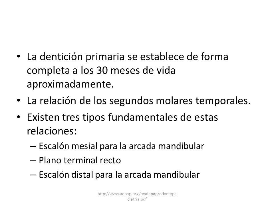 La dentición primaria se establece de forma completa a los 30 meses de vida aproximadamente. La relación de los segundos molares temporales. Existen t