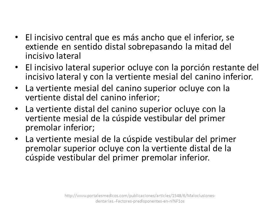 El incisivo central que es más ancho que el inferior, se extiende en sentido distal sobrepasando la mitad del incisivo lateral El incisivo lateral sup