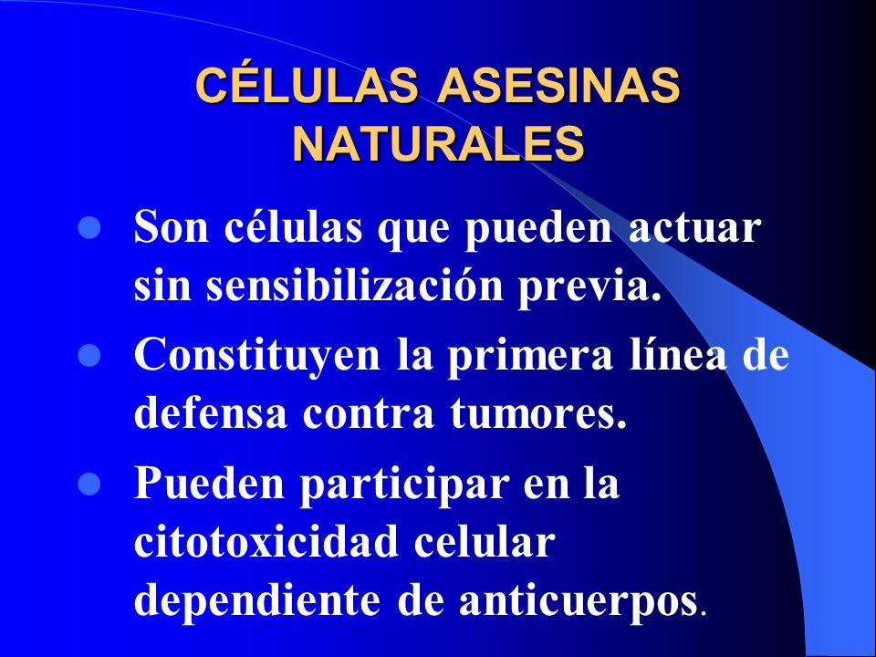 CÉLULAS ASESINAS NATURALES Son células que pueden actuar sin sensibilización previa. Constituyen la primera línea de defensa contra tumores. Pueden pa