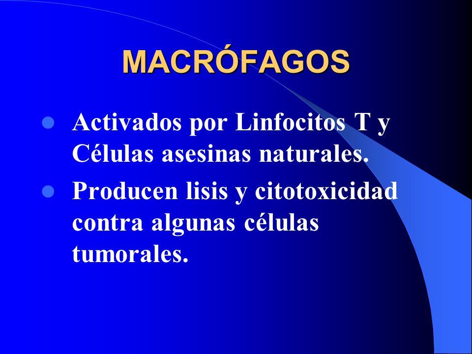 MACRÓFAGOS Activados por Linfocitos T y Células asesinas naturales. Producen lisis y citotoxicidad contra algunas células tumorales.
