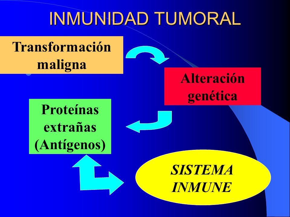INMUNIDAD TUMORAL Transformación maligna Alteración genética Proteínas extrañas (Antígenos) SISTEMA INMUNE