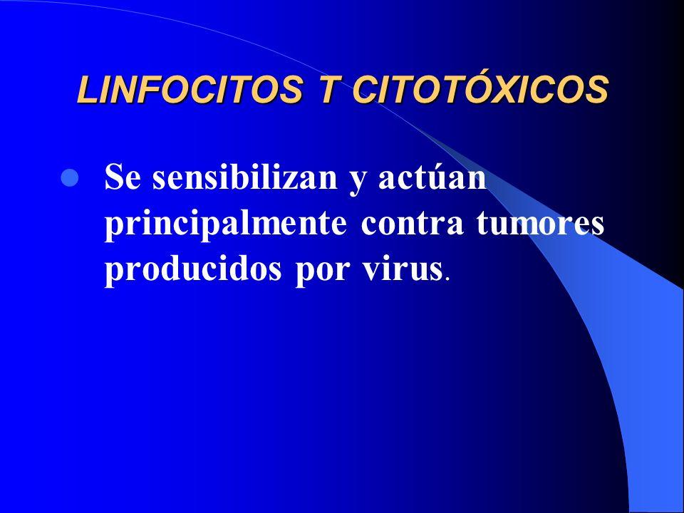 LINFOCITOS T CITOTÓXICOS Se sensibilizan y actúan principalmente contra tumores producidos por virus.