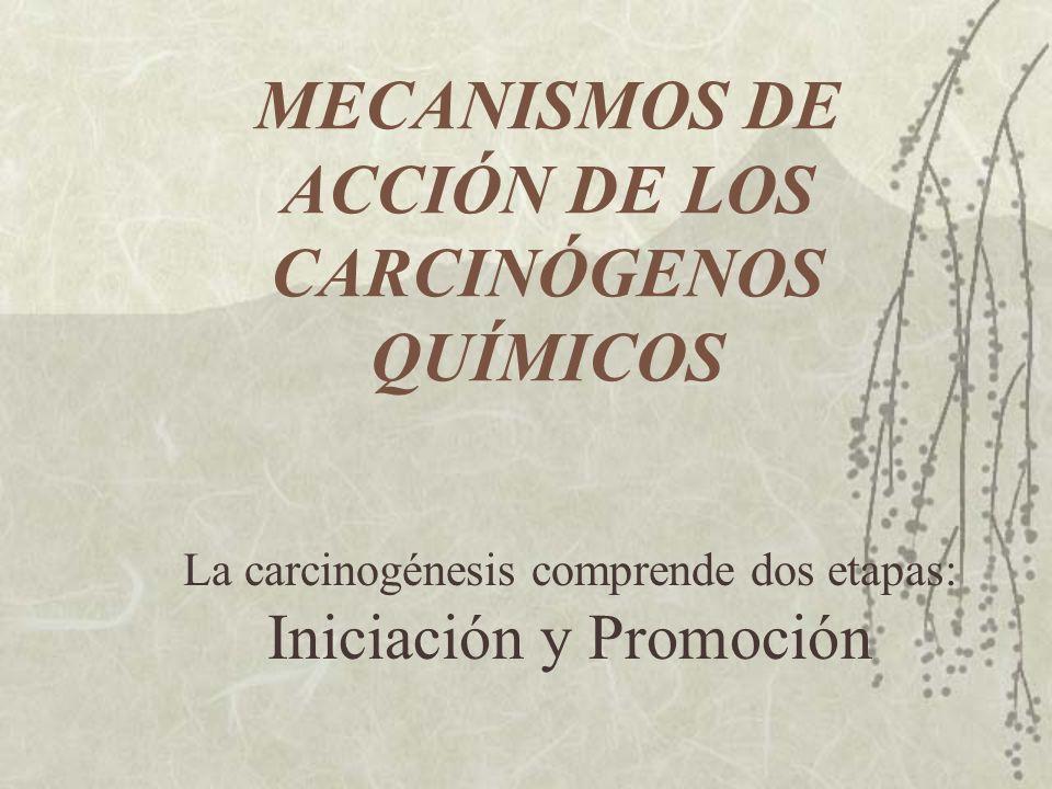 MECANISMOS DE ACCIÓN DE LOS CARCINÓGENOS QUÍMICOS La carcinogénesis comprende dos etapas: Iniciación y Promoción