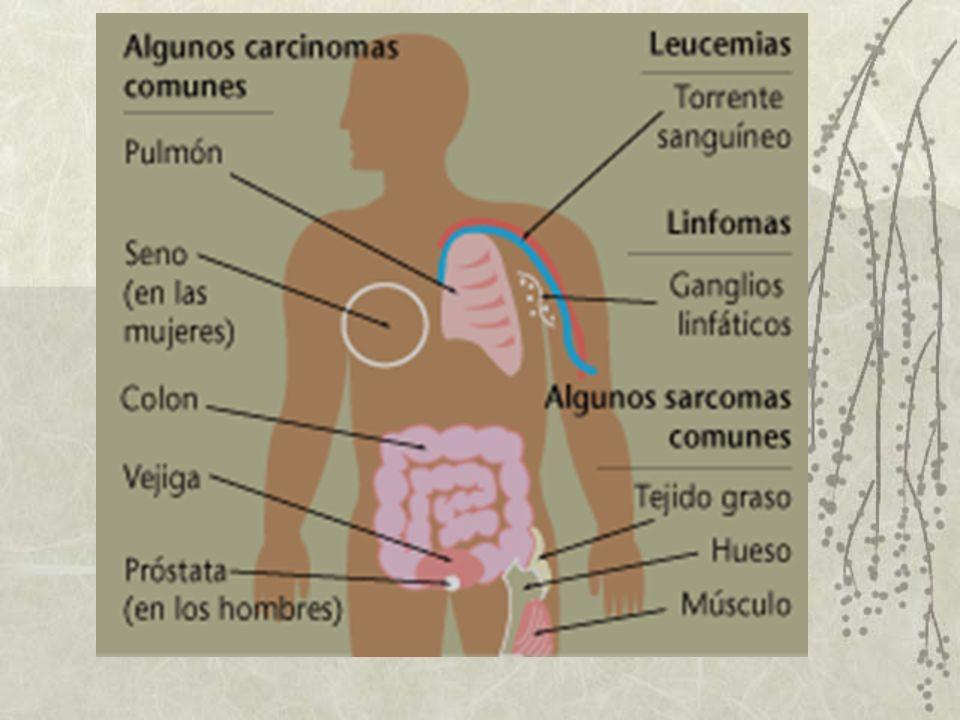 EPIDEMIOLOGÍA DEL CÁNCER En Estados Unidos el Carcinoma Broncógeno, Prostático, Mamario y de Colon y Recto son los que causan mayor mortalidad.