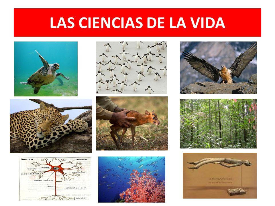 BIOTECNOLOGÍA Se desarrolla en un enfoque multidisciplinario que involucra varias disciplinas y ciencias como biología, bioquímica, genética, virologí