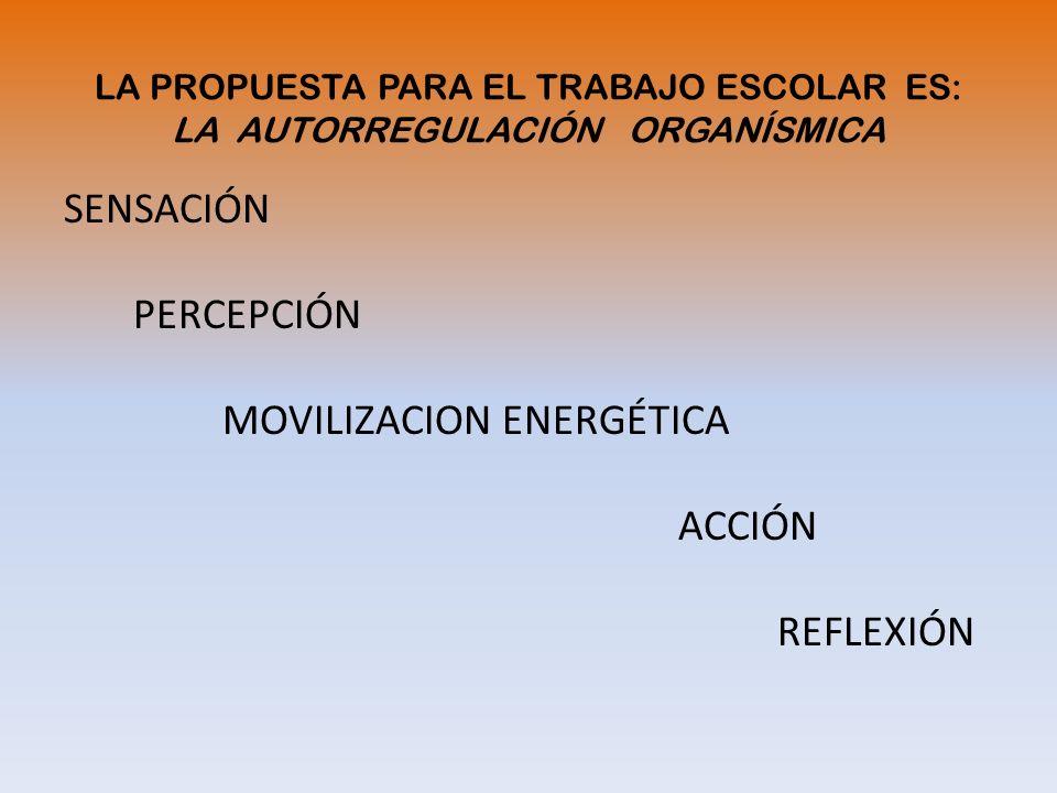 LA PROPUESTA PARA EL TRABAJO ESCOLAR ES: LA AUTORREGULACIÓN ORGANÍSMICA SENSACIÓN PERCEPCIÓN MOVILIZACION ENERGÉTICA ACCIÓN REFLEXIÓN