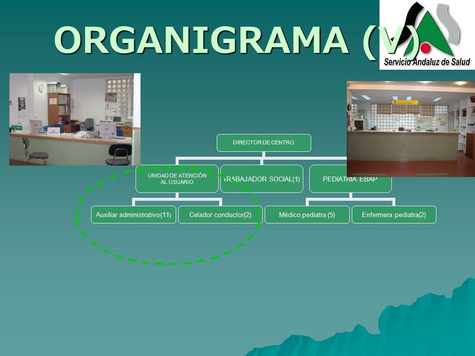 ORGANIGRAMA (V) DIRECTOR DE CENTRO UNIDAD DE ATENCIÓN AL USUARIO Auxiliar administrativo(11) Celador conductor(2) TRABAJADOR SOCIAL(1) PEDIATRÍA EBAP
