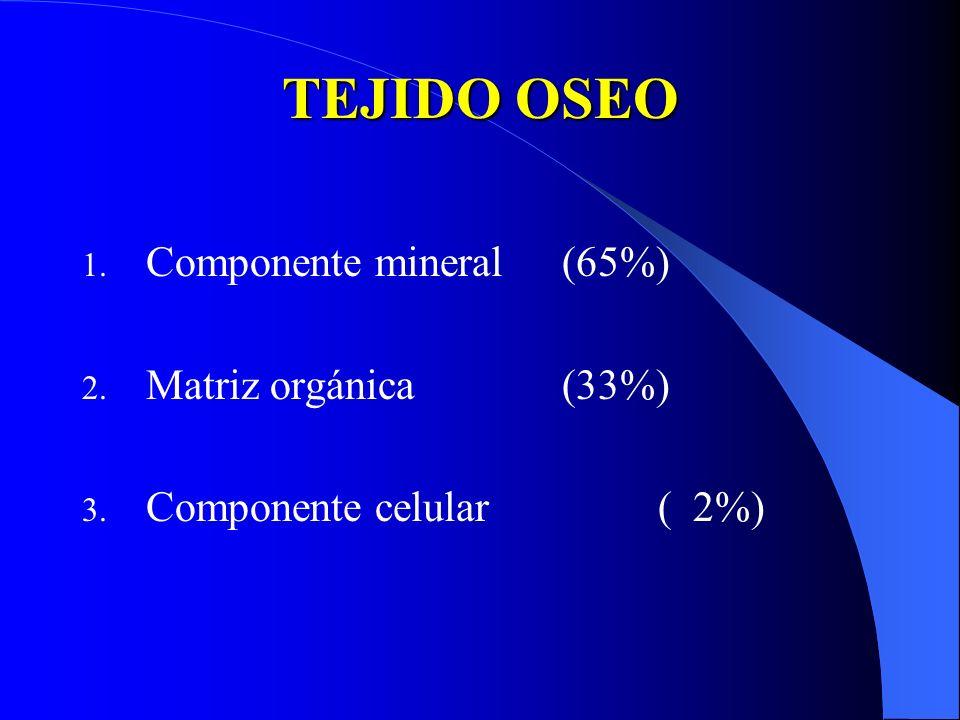 TEJIDO OSEO 1. Componente mineral(65%) 2. Matriz orgánica(33%) 3. Componente celular( 2%)