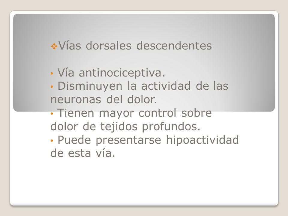 Vías dorsales descendentes Vía antinociceptiva. Disminuyen la actividad de las neuronas del dolor. Tienen mayor control sobre dolor de tejidos profund