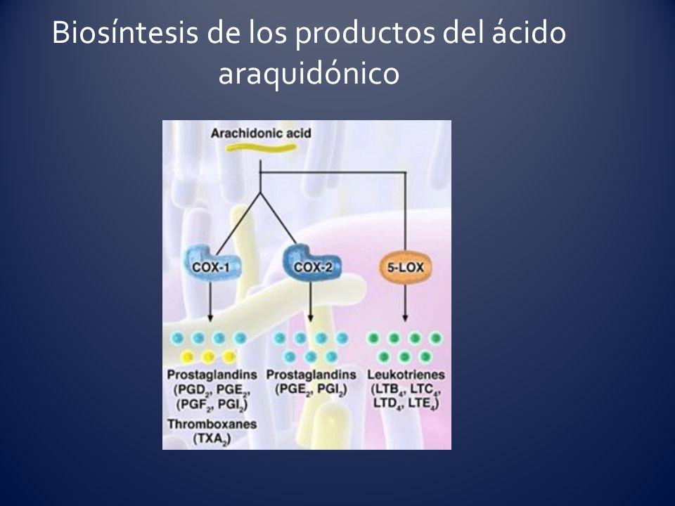 Biosíntesis de los productos del ácido araquidónico