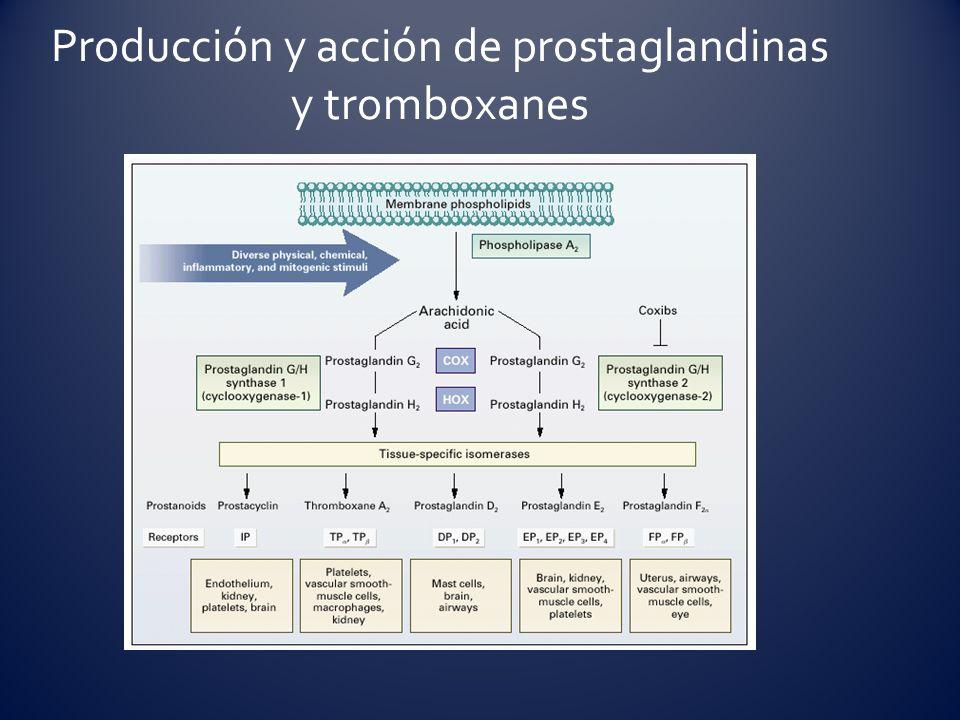 Producción y acción de prostaglandinas y tromboxanes