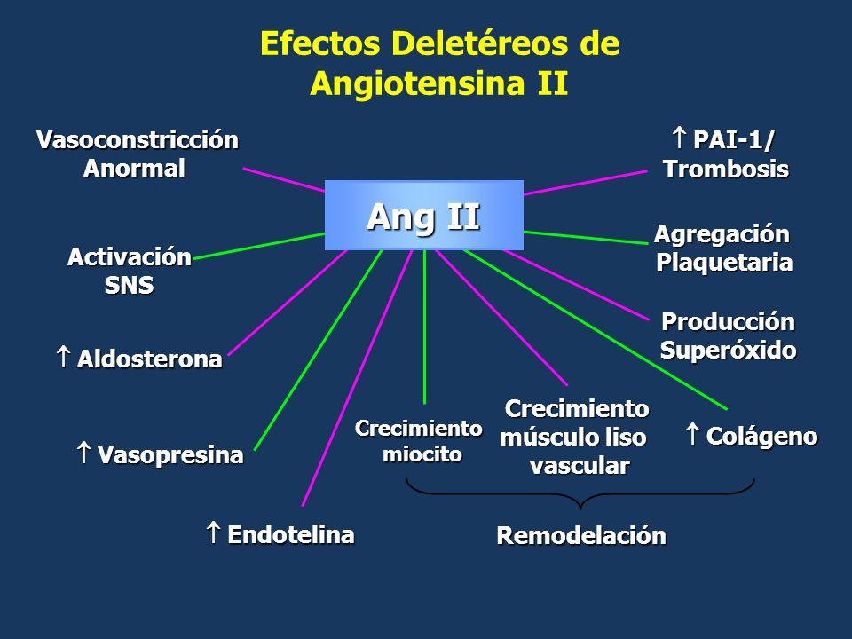 Vasoconstricción Anormal Activación SNS Aldosterona Aldosterona Vasopresina Vasopresina Crecimiento miocito Crecimiento músculo liso vascular Colágeno