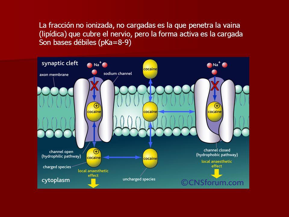 La fracción no ionizada, no cargadas es la que penetra la vaina (lipídica) que cubre el nervio, pero la forma activa es la cargada Son bases débiles (