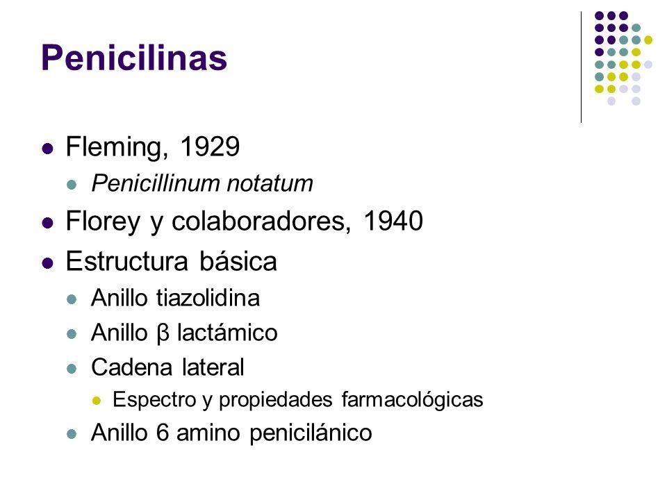 Fleming, 1929 Penicillinum notatum Florey y colaboradores, 1940 Estructura básica Anillo tiazolidina Anillo β lactámico Cadena lateral Espectro y prop