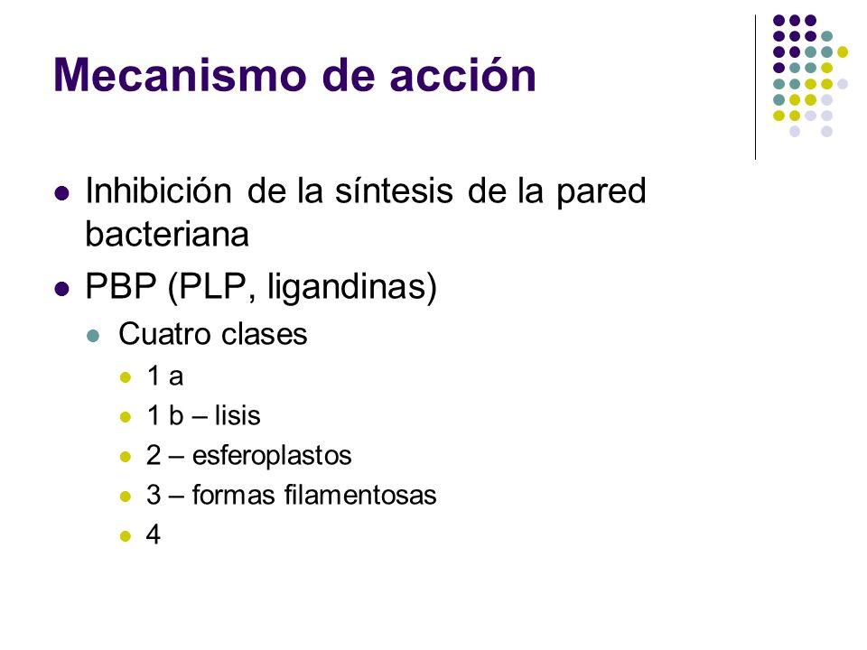 Mecanismo de acción Inhibición de la síntesis de la pared bacteriana PBP (PLP, ligandinas) Cuatro clases 1 a 1 b – lisis 2 – esferoplastos 3 – formas