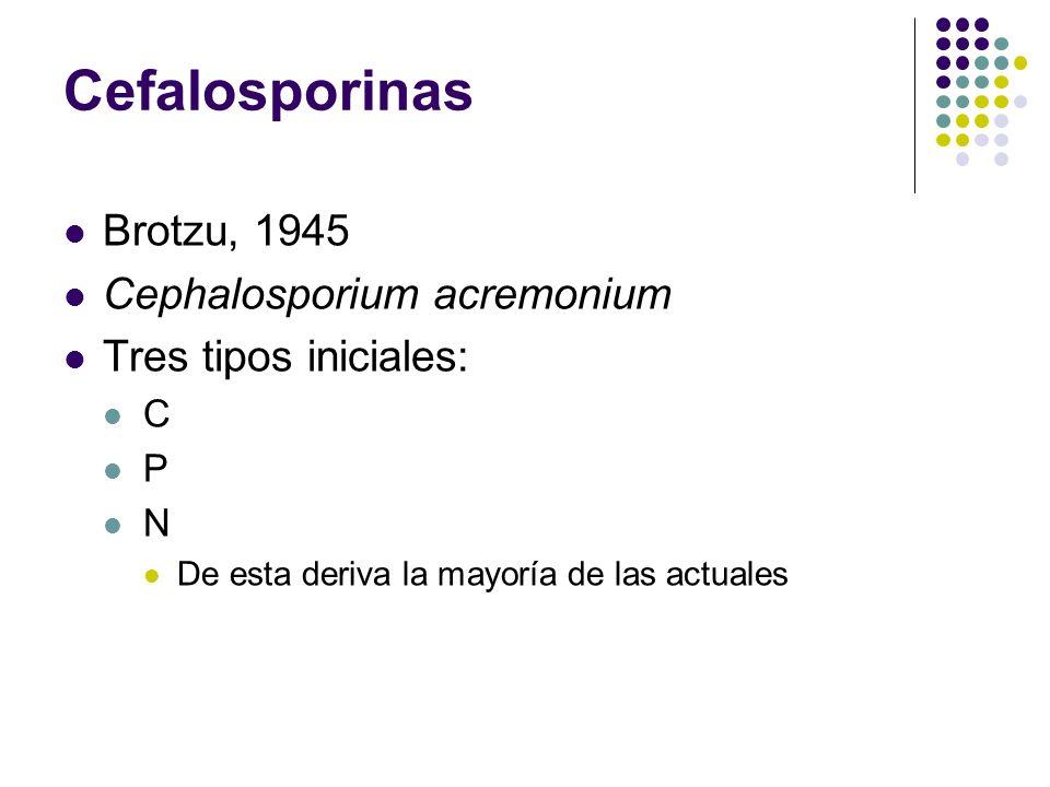 Brotzu, 1945 Cephalosporium acremonium Tres tipos iniciales: C P N De esta deriva la mayoría de las actuales