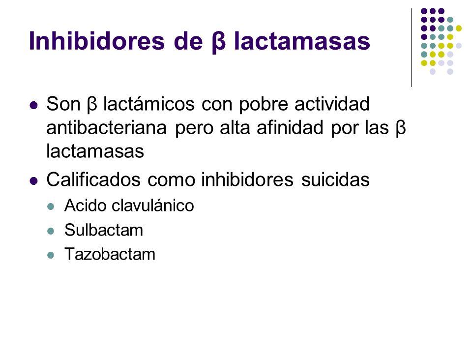 Inhibidores de β lactamasas Son β lactámicos con pobre actividad antibacteriana pero alta afinidad por las β lactamasas Calificados como inhibidores s