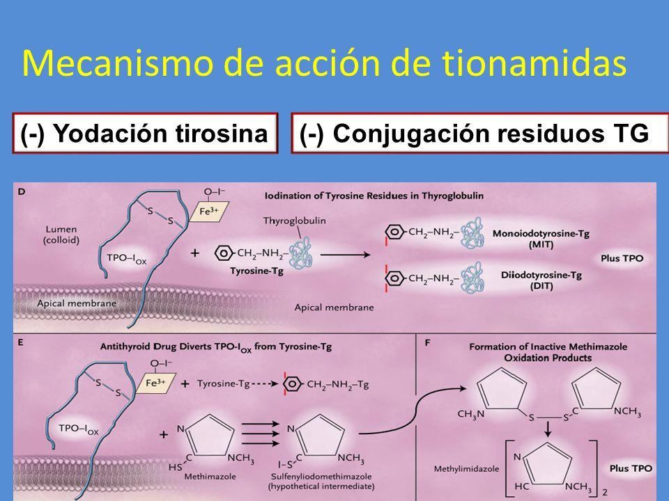 Mecanismo de acción de tionamidas (-) Yodación tirosina(-) Conjugación residuos TG