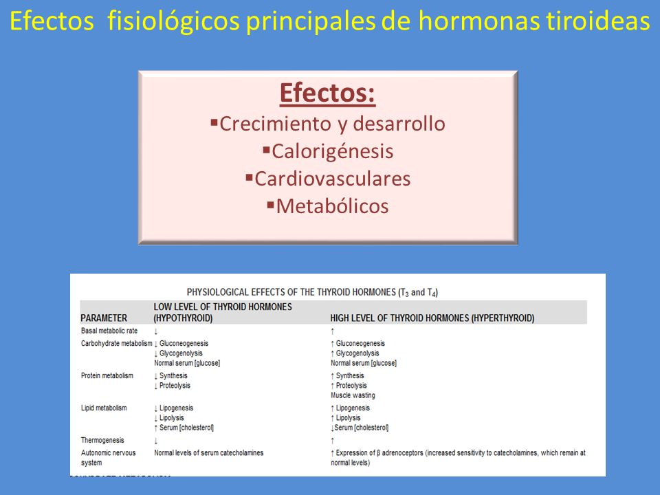 Efectos: Crecimiento y desarrollo Calorigénesis Cardiovasculares Metabólicos Efectos fisiológicos principales de hormonas tiroideas