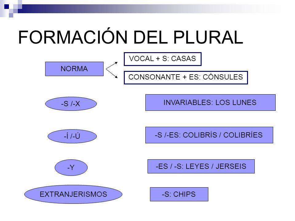 FORMACIÓN DEL PLURAL -S /-X INVARIABLES: LOS LUNES -Y -S /-ES: COLIBRÍS / COLIBRÍES -ES / -S: LEYES / JERSEIS -Í /-Ú EXTRANJERISMOS -S: CHIPS NORMA VO