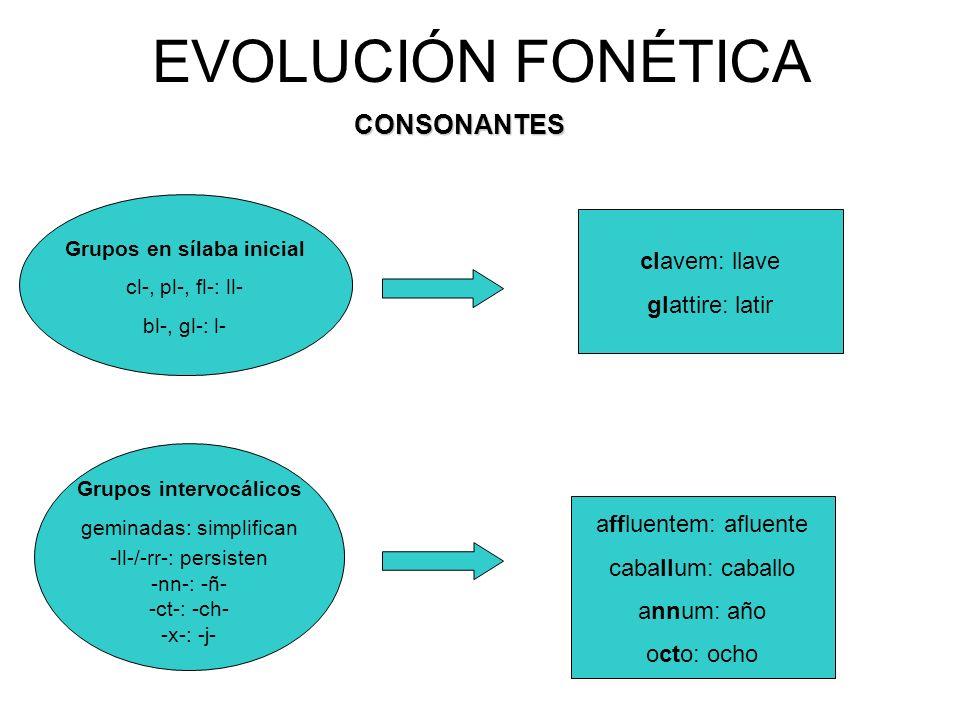 EVOLUCIÓN FONÉTICACONSONANTES Grupos en sílaba inicial cl-, pl-, fl-: ll- bl-, gl-: l- Grupos intervocálicos geminadas: simplifican -ll-/-rr-: persisten -nn-: -ñ- -ct-: -ch- -x-: -j- clavem: llave glattire: latir affluentem: afluente caballum: caballo annum: año octo: ocho