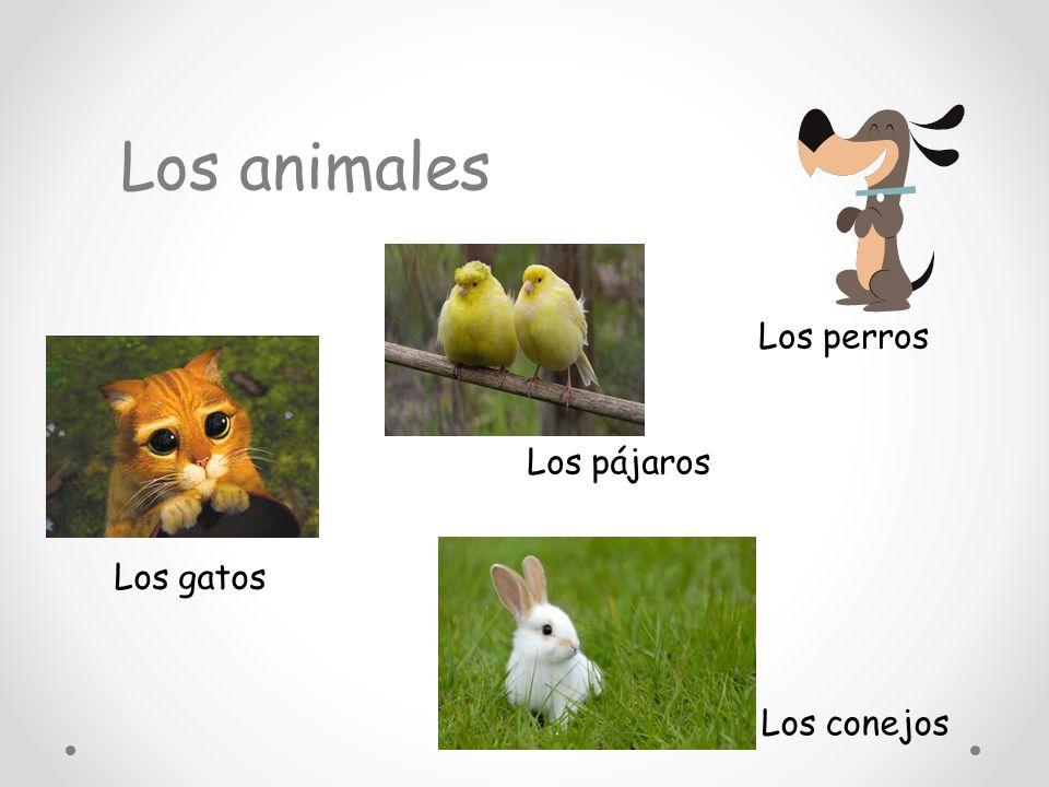 Los animales Los perros Los gatos Los conejos Los pájaros