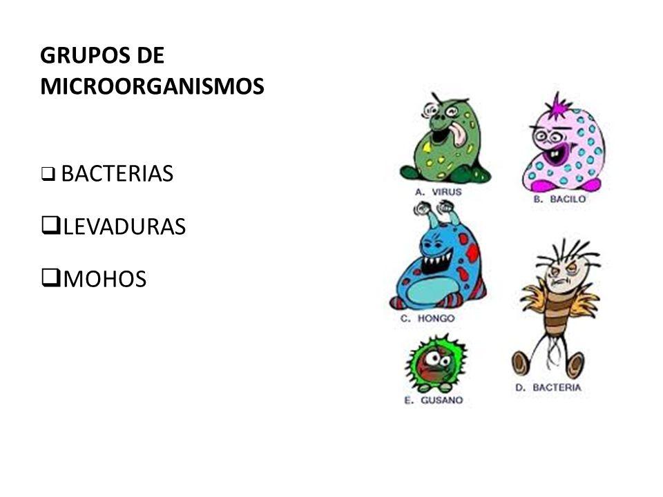 GRUPOS DE MICROORGANISMOS BACTERIAS LEVADURAS MOHOS