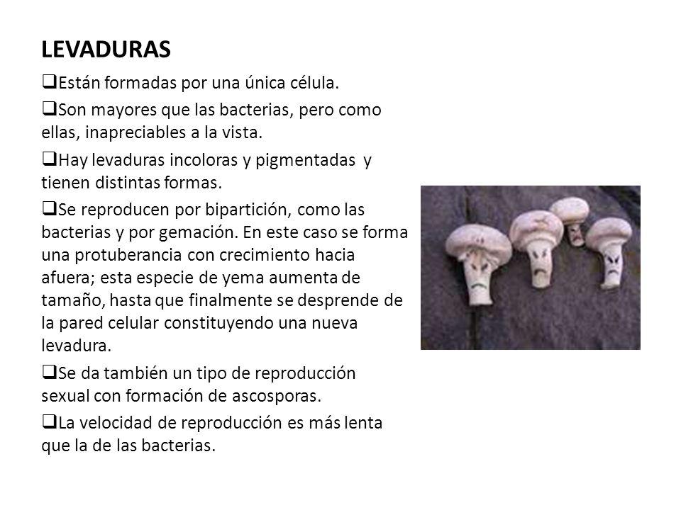 LEVADURAS Están formadas por una única célula. Son mayores que las bacterias, pero como ellas, inapreciables a la vista. Hay levaduras incoloras y pig