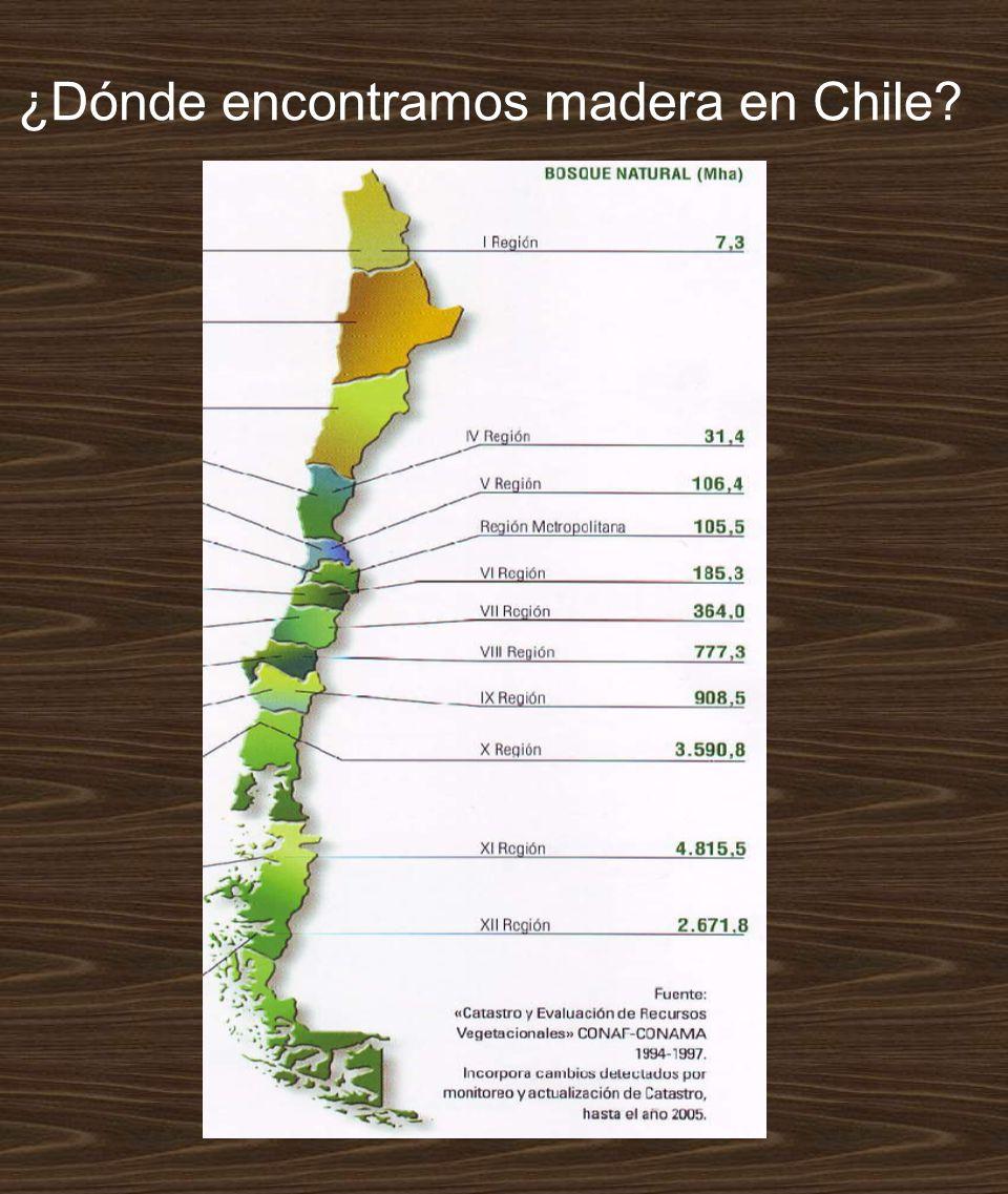 ¿Dónde encontramos madera en Chile?