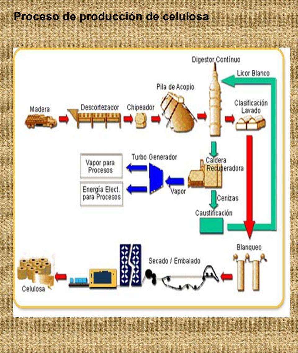 Proceso de producción de celulosa