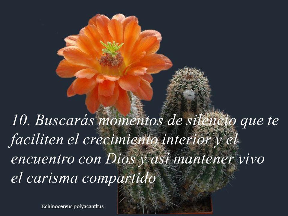 Echinocereus polyacanthus 10. Buscarás momentos de silencio que te faciliten el crecimiento interior y el encuentro con Dios y así mantener vivo el ca