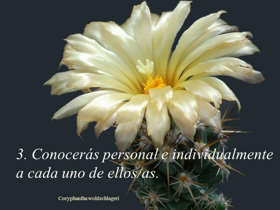 Coryphantha wohlschlageri 3. Conocerás personal e individualmente a cada uno de ellos/as.