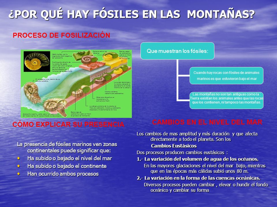 ¿POR QUÉ HAY FÓSILES EN LAS MONTAÑAS? Que muestran los fósiles: Cuando hay rocas con fòsiles de animales marinos es que estuvieron bajo el mar Las mon