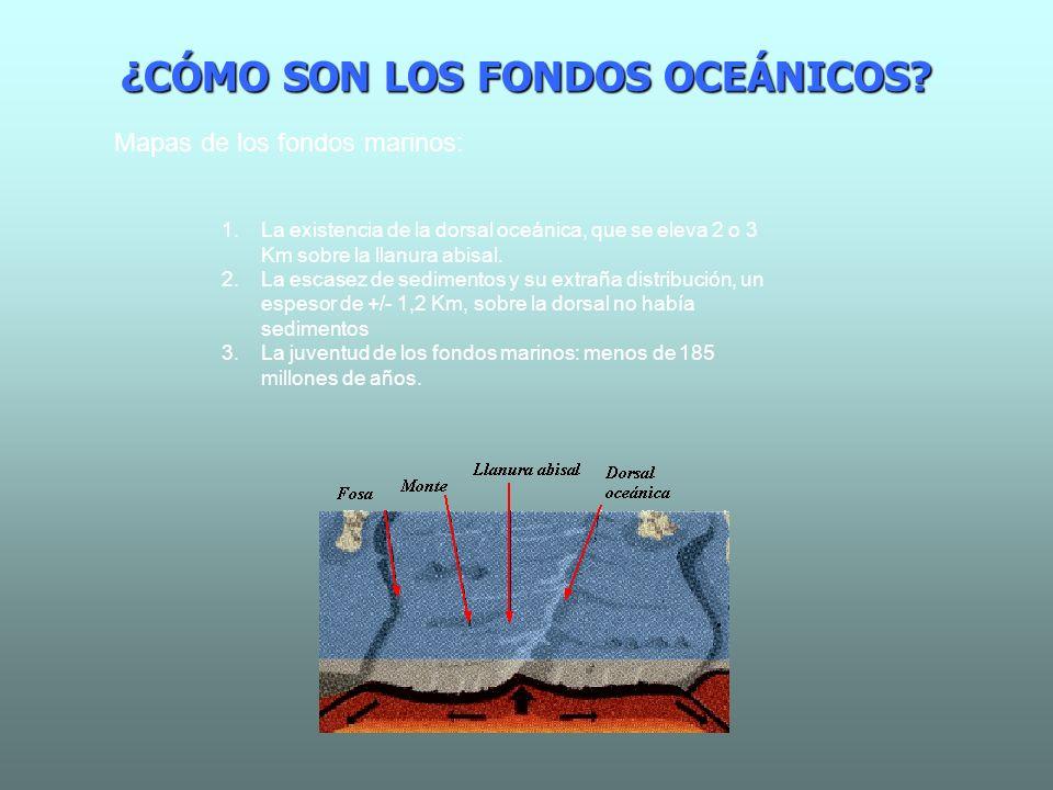 ¿CÓMO SON LOS FONDOS OCEÁNICOS? Mapas de los fondos marinos: 1.La existencia de la dorsal oceánica, que se eleva 2 o 3 Km sobre la llanura abisal. 2.L