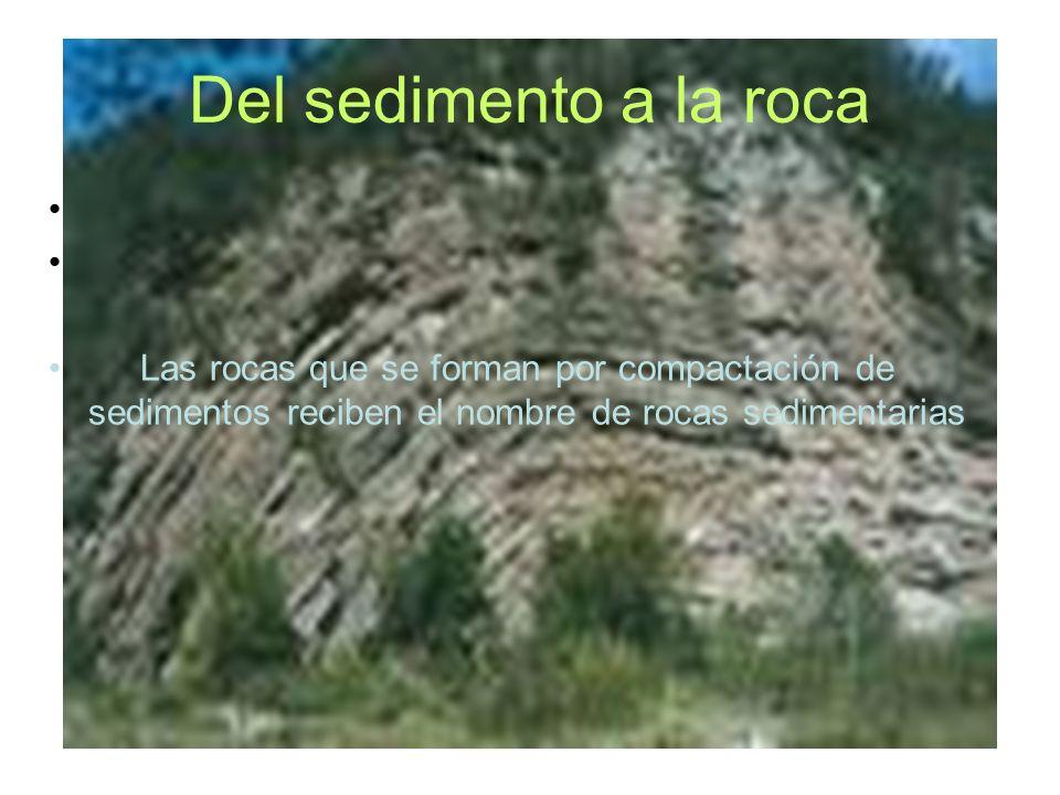 Del sedimento a la roca Las rocas que se forman por compactación de sedimentos reciben el nombre de rocas sedimentarias