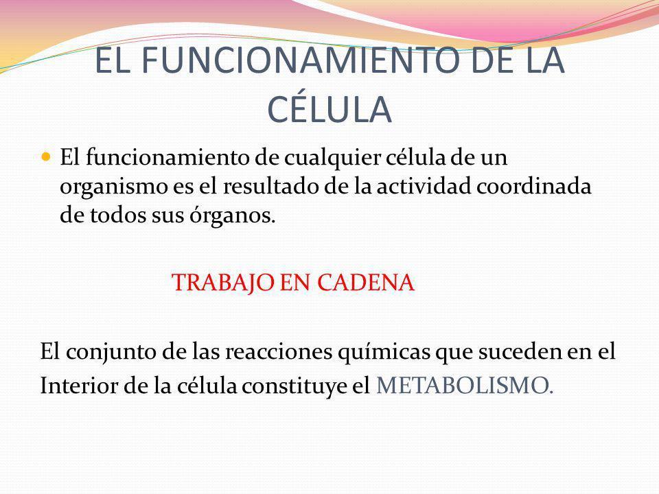 EL FUNCIONAMIENTO DE LA CÉLULA El funcionamiento de cualquier célula de un organismo es el resultado de la actividad coordinada de todos sus órganos.