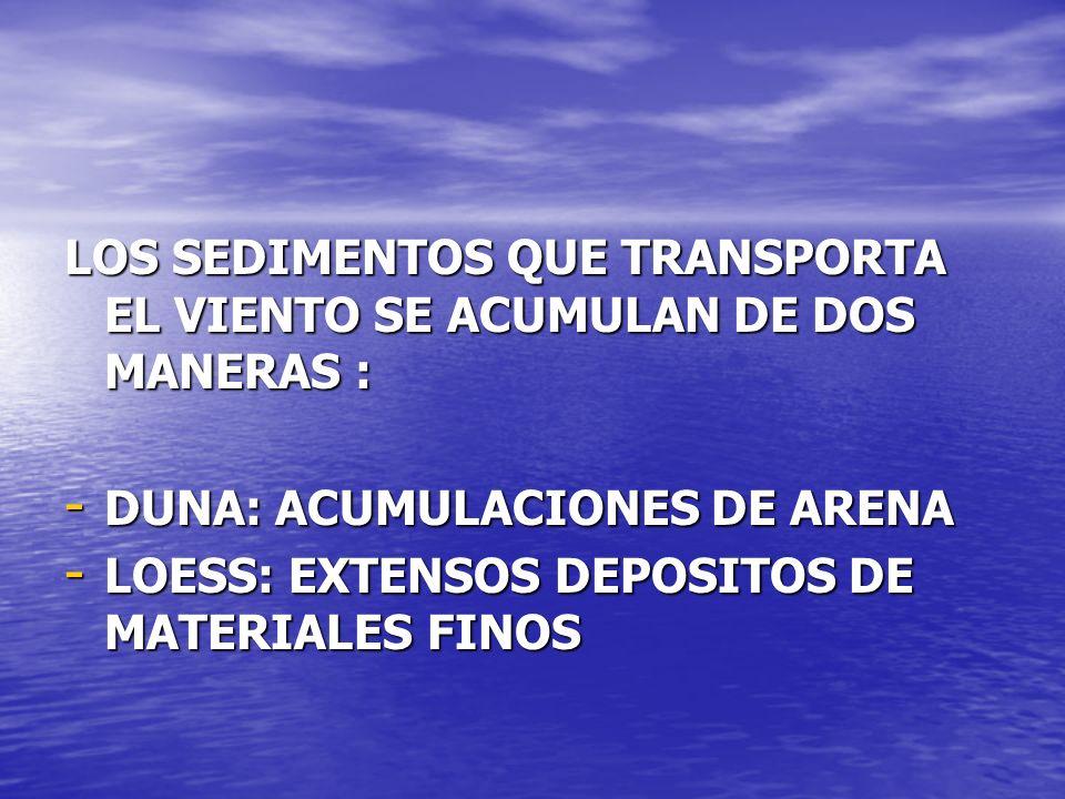 LOS SEDIMENTOS QUE TRANSPORTA EL VIENTO SE ACUMULAN DE DOS MANERAS : - DUNA: ACUMULACIONES DE ARENA - LOESS: EXTENSOS DEPOSITOS DE MATERIALES FINOS